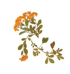 Artistic flower design vector
