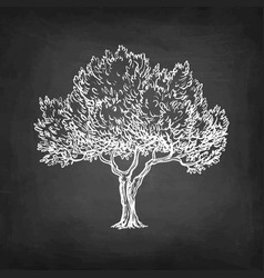 chalk sketch of olive tree vector image