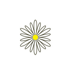 Chamomile logo icon flower herb symbol vector