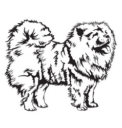 Decorative chow chow vector