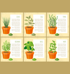 edible indoor plants used as seasoning for salads vector image
