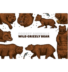 Grizzly bear background brown wild animals in vector