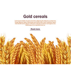 Realistic cereals background template ears vector