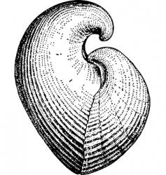 seashell conchidium vector image