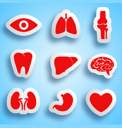 anatomical icons set vector image