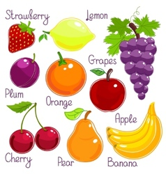 Selection of colorful tropical fruit with labels vector image