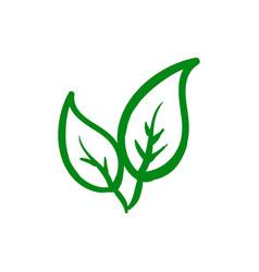 organic leaf icon design template vector image