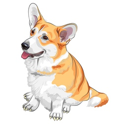 Pembroke Welsh Corgi vector