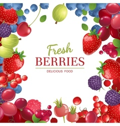 background with berries vector image vector image