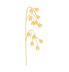 ripe ear of oat icon vector image