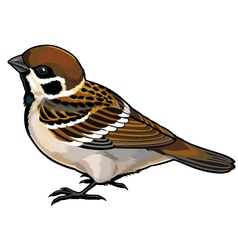 tree sparrow vector image vector image