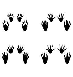 black footprints raccoon vector image