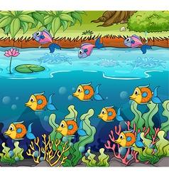 School of fish vector