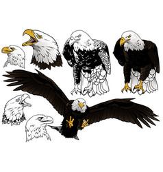 Set wild bald eagle vector