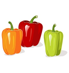 Colored pepper vector image vector image
