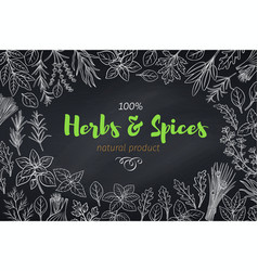 Culinary herbs and spice template vector