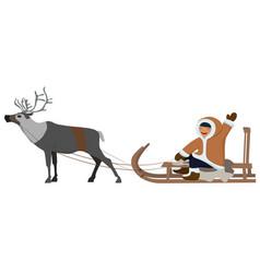 eskimo on deer sledding isolated image on white vector image