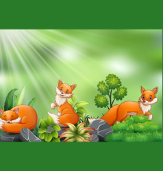 Nature scene with group of fox cartoon vector
