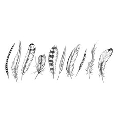 set ten bird feathers ink sketch hand drawn vector image