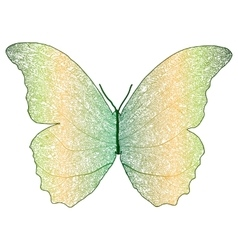 Skeleton butterfly combined with dry leaf vector