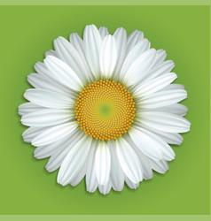White chamomile flower vector