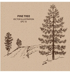 Young Pine Tree vector