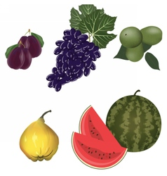 Autumn fruits set vector image vector image