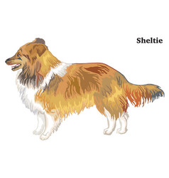 colored decorative standing portrait of sheltie vector image