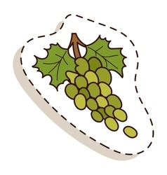 Green grapes bunch isolated on white vector