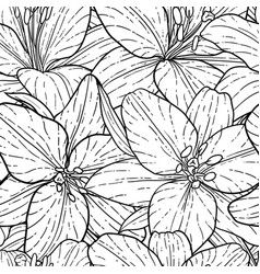 seamless pattern beautiful monochrome black and vector image