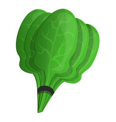 spinach branch icon cartoon style vector image