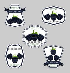 The theme blackberry vector