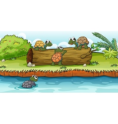 Turtles on a dry wood vector image