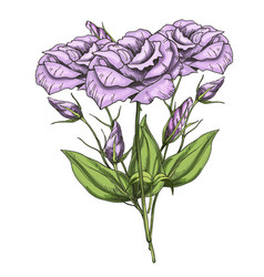 hand drawn bouquet of eustoma flowers isolated on vector image vector image
