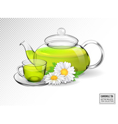 chamomile tea in a transparent teapot with a cup vector image