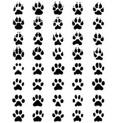 Print of paws of dogs and cats vector