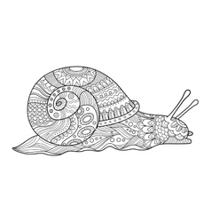 Snail coloring book for adults vector image