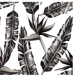 Strelitzia and banana leaves black and white vector