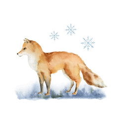 watercolor christmas card with a fox vector image