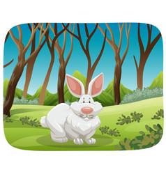 white rabbit in nature scene vector image