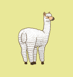 cute alpaca llamas or wild guanaco on the vector image