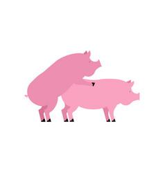 Pig sex piggy intercourse pigs isolated farm vector