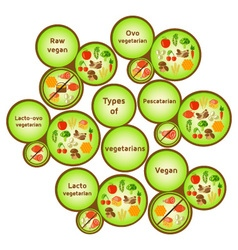 Vegetarian types infographic vector image