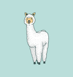 Cute alpaca llamas or wild guanaco on the vector