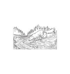 Fox Drinking River Woods Black and White Drawing vector image