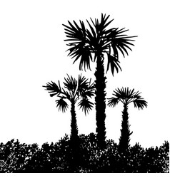 landscape with palm trees vector image
