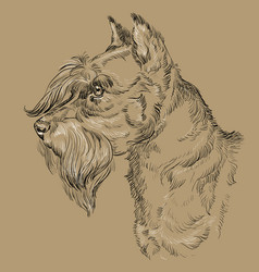 Monochrome miniature schnauzer hand drawing vector