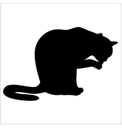 Silhouette a cat sitting and washing vector