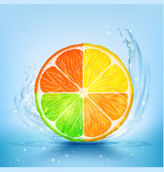 Slice of lemon lime orange and grapefruit vector