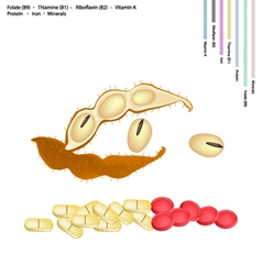 Soybean with Vitamin B9 B1 B2 and K vector